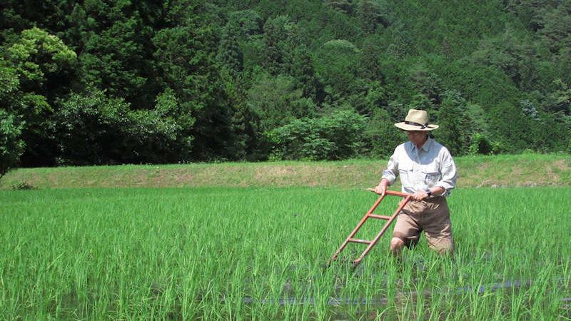 自然に優しい農法|除草の様子