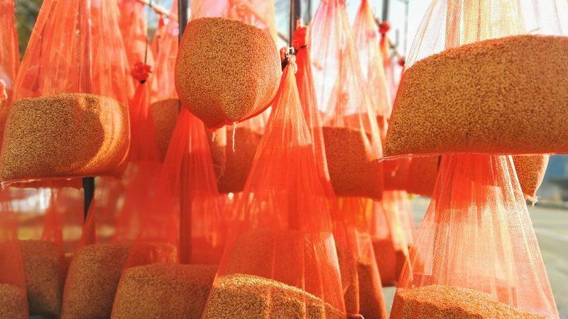 2021年産米の準備が始まりました。-農薬を使わない温湯消毒-